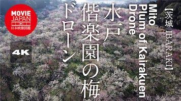 水戸 偕楽園の梅 ドローン