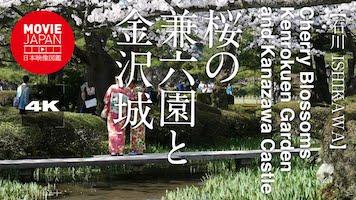 桜の兼六園と金沢城