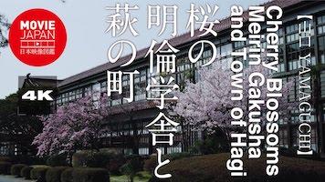 桜の明倫学舎と萩の町