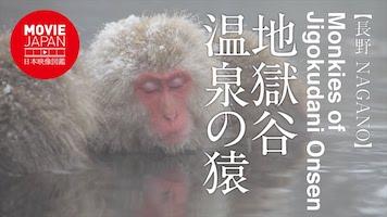 地獄谷温泉の猿