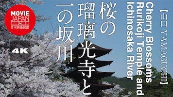 桜の瑠璃光寺と一の坂川