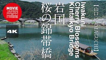 岩国 桜の錦帯橋