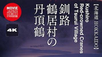 釧路 鶴居村の丹頂鶴