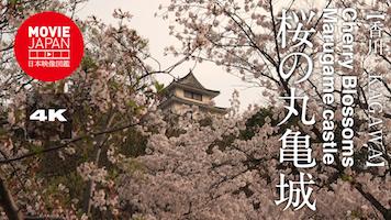 桜の丸亀城
