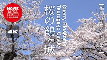 桜の鶴ヶ城