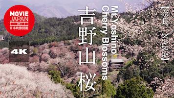 日本三大桜名所 吉野山の桜