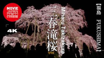 日本三大桜 三春滝桜