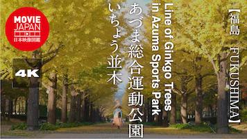 あづま総合運動公園 いちょう並木