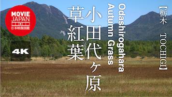 小田代ヶ原 草紅葉