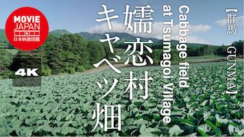 嬬恋村 キャベツ畑