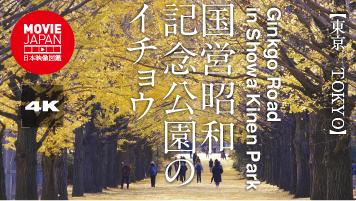 国営昭和記念公園のイチョウ