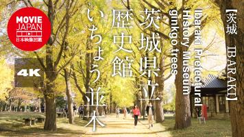 茨城県立歴史館 いちょう並木